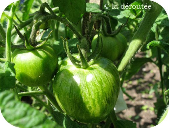 tomatesgz