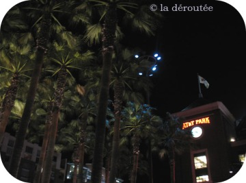 palmiersatt