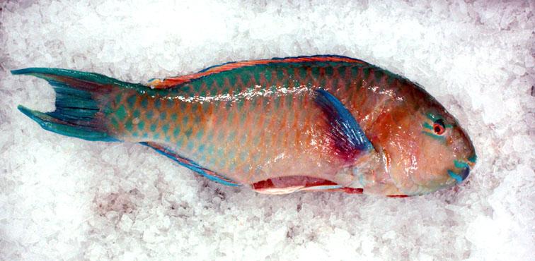 La pêche durable (un 5 à 7 par Slow FoodMontréal)